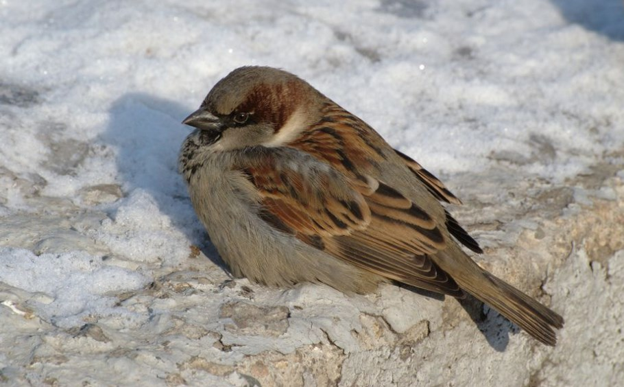 World Sparrow Day: Let's be aware of our cute friend before they become extinct
