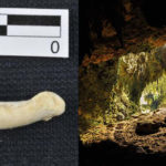 A new species of ancestors discovered in the cave of Philippines