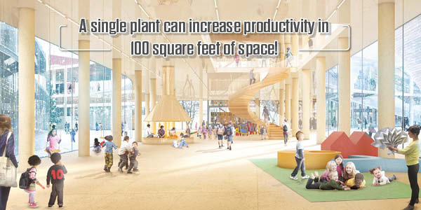 A single plant can increase productivity in 100 square feet of space!