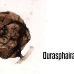 Oldest Fungus