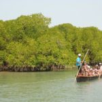 Disappearance of Mangroves